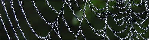 SEO Spider Web - Photo by Bansidhe