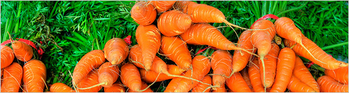 Carrots - Photo by Ed Yourdon