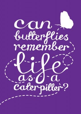 Butterflies Remember Poster