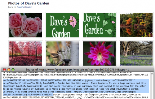 Daves Garden