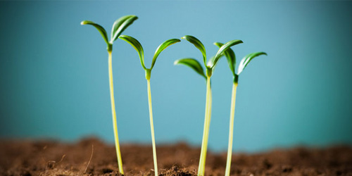 Start Up Growth