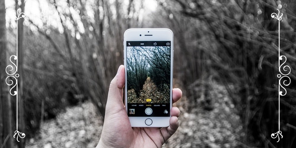 iPhone Forest