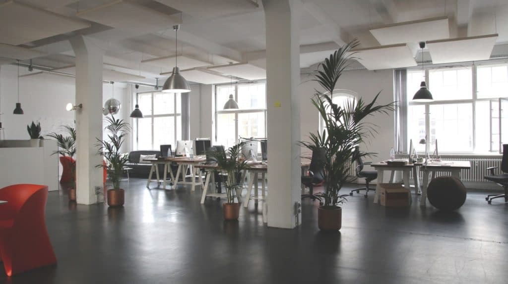 Bright office space with plants