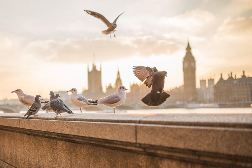 Pigeons and seagulls in front of Big Ben and Tower of London - Branding Mistakes