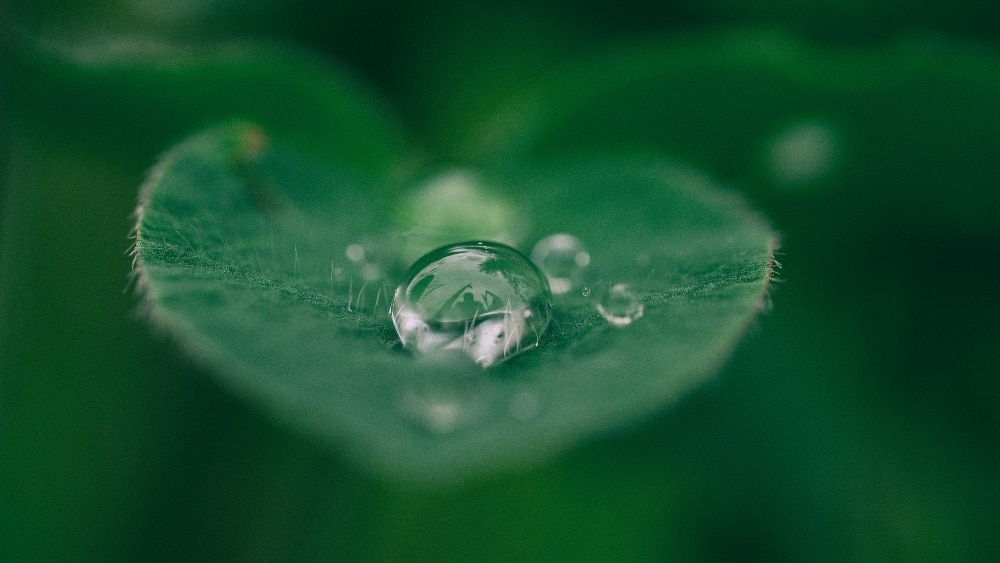Green leaf with water droplets - How To Build An Online Presence With Sustainability At Its Core