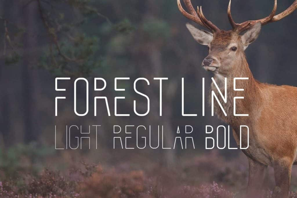 The Forest Line